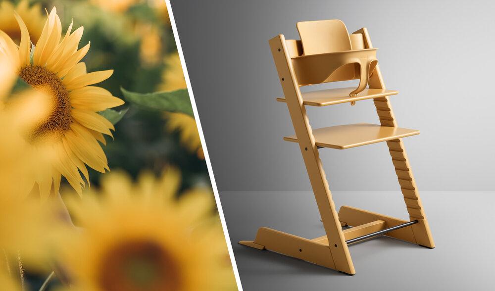 Sunflowers and Sunflower TT chair